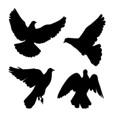black pigeons silhouette