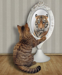 The cat sits near the mirror and looks at his unusual reflection in the room