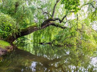 Biotop an einem Teich