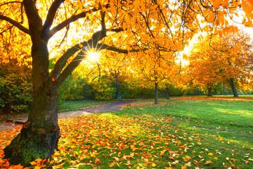 herbstlicher Nachmittag im Park