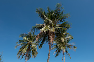 coconut tree on the beach (selective focus and tone adjustment applied)