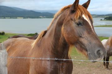 caballo en el campo de Alava