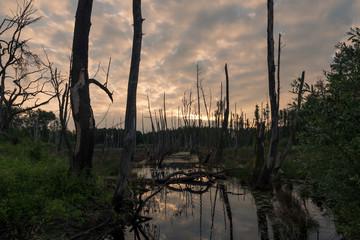 Bruchwald bei Sonnenaufgang