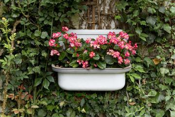 Garten, Gartenideen, Blumen, Begonien