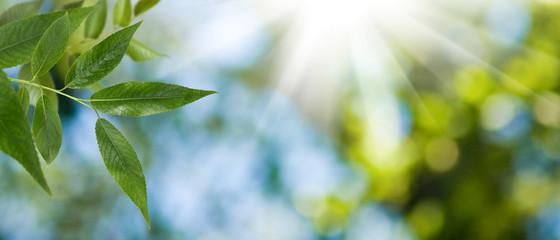 leaf on tree on green background