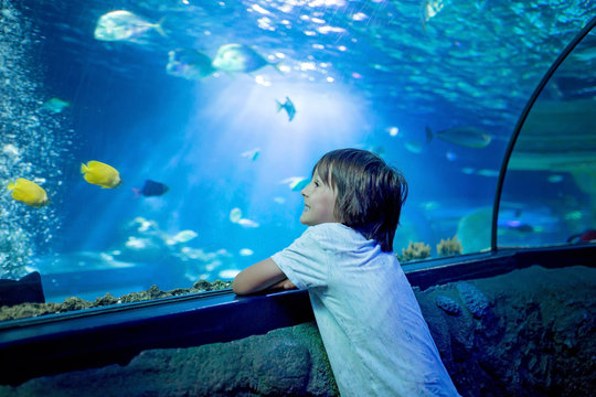 Little boy, kid watching the shoal of fish swimming in oceanarium, children enjoying underwater life