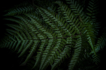 Fern Garden 2 - Macro Photography - Minimal Background