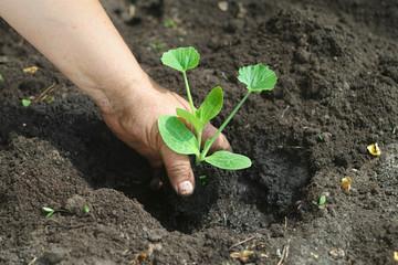 Planting New Plant
