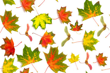 seamless pattern multicolored dry falling leaves