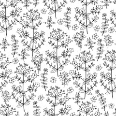 Seamless floral pattern Hypericum, St. John's wort or Hartheu branch vector sketch hand drawn healing herb isolated on white bckground, Tutsan herbs, design for package cosmetic, medicine, natural tea