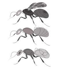 Vector set of ants. Collection of stylized insects. Linear Art.