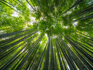 Zelfklevend Fotobehang Bamboe Bamboo Forest in Japan - a wonderful place for recreation