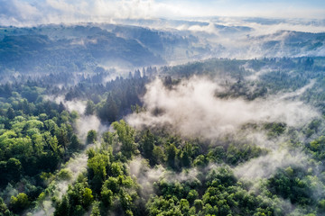 Aerial view of morning fog in forest