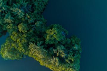 Árvores dentro da lagoa da Barra da Tijuca - Rio de Janeiro