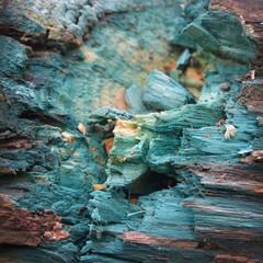 Xylindein, green-oak