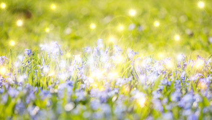 bright background with small blue flowers in grass