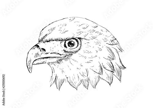 Eagle head logo Template  Hand draw illustration