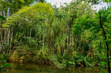 Nature of Topes de Collantes, a nature reserve park in the Escambray Mountains range in Cuba.
