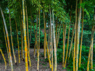 Bamboo trees at Imperial Palace East Gardens in Tokyo