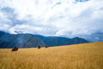 Cavalier chevauchant devant les montagnes (Peru, Amérique du Sud)