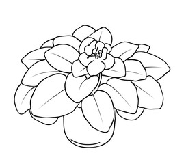 Vector illustration, isolated violet Saintpaulia  flower with leaves  in black and white colors, outline hand painted drawing