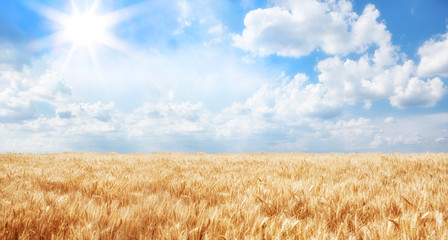 Wall Mural - Summer Landscape of Golden Wheat Field