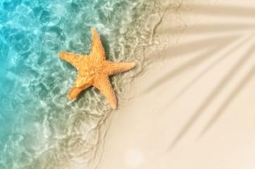 starfish on the summer beach in sea water.