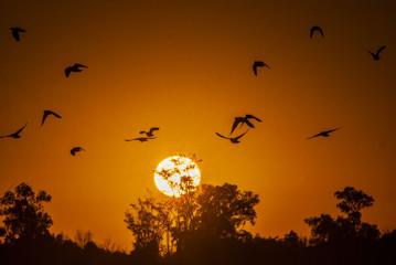 Keuken foto achterwand Rood Volando al Amanecer