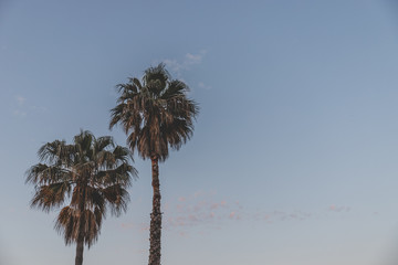 Two palm trees against a bright blue sky with plenty of copy space