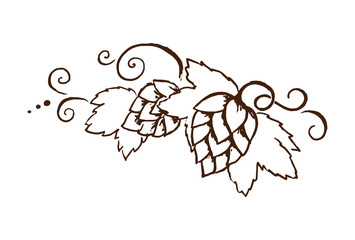 Vector hop cones with leafs and vines outline illustration For oktoberfest or thanksgiving day