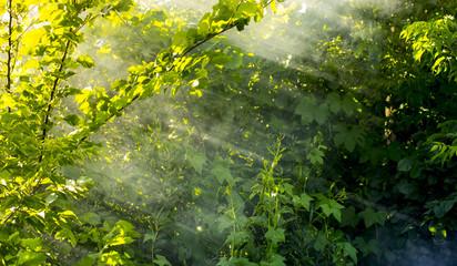 Smoke in the woods, the rays of the sun illuminate the smoke