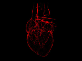 Isolated x-ray red human heart 3d illustration on black background