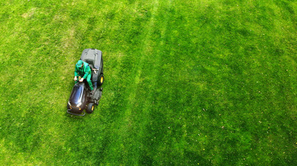Gardener cuts lawn with a lawnmower