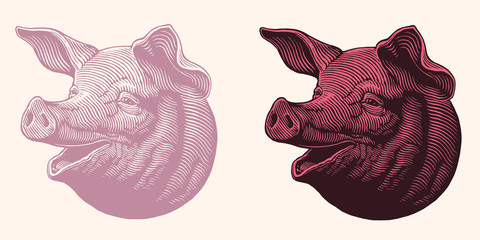 The head of a pig. Design set. Hand drawn engraving. Editable vector vintage illustration. Isolated on white and dark background. 8 EPS