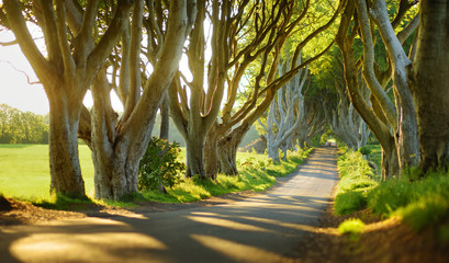The Dark Hedges, an avenue of beech trees along Bregagh Road in County Antrim, Nothern Ireland Wall mural
