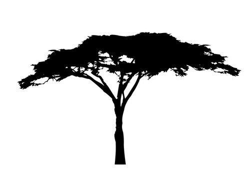 African tree icon, acacia tree silhouette, vector isolated