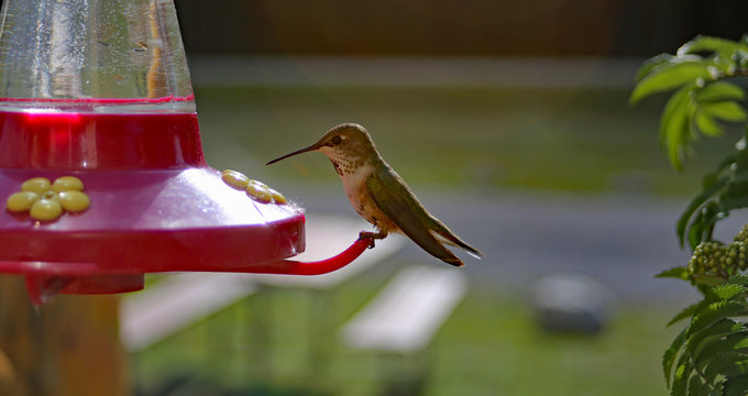 Colourful sitting hummingbird