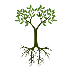 Green Tree with Leaves and Roots. Vector Illustration.