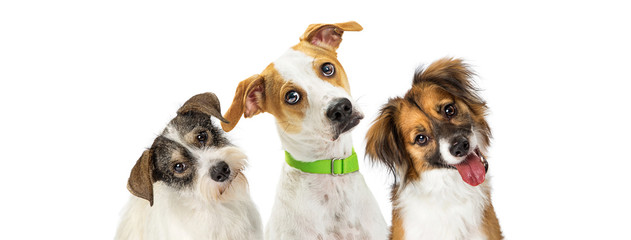 Three Cute Dogs Tilting Heads Looking Forward Wall mural