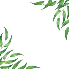 Watercolor postcard with eucalyptus leaves. Illustration on white background for invitations, cards, business cards, weddings.