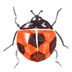 watercolor hand drawn cartoons sport soccer insect ladybird, with football ball pattern on the wings, flat style esp 10 vector illustration isolated on white background.