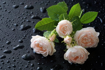 White and pink roses on a black background with water drops and pink petals.