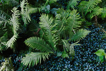 Beautiful green nature, fern leaves in the forest. Background