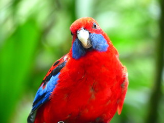 Beautiful tropical bird on a green tropical forest background