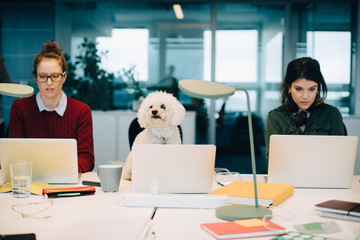 Female professionals using laptops while sitting with dog at desk in creative office