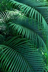 Beautiful of fern tropical leaves