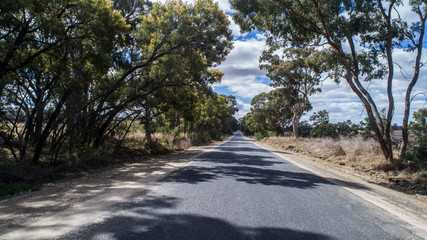 Australian country rural road lined with eucalyptus gum trees