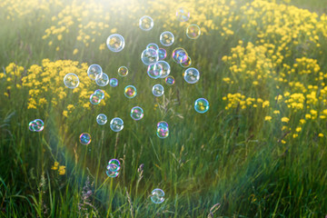 Abstract, blurry soap bubbles in the field. Design Elements