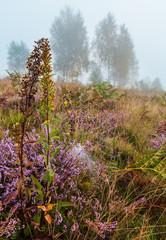 Wall Murals Natuur Misty morning dew on mountain meadow
