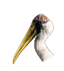 the head of the bird stork the sides in profile, sketch vector graphics color illustration on white background